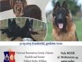 wystawa-psów