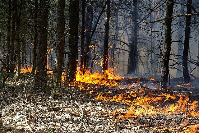 Najwyższy stopień zagrożenia pożarowego w lasach
