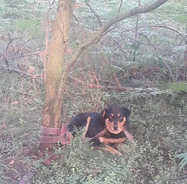 Szukają właściciela porzuconego psa
