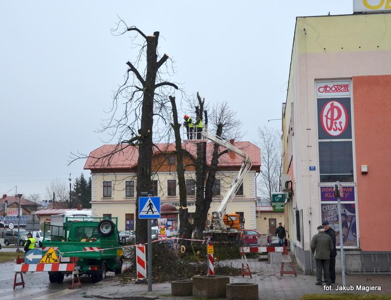 Leżajsk: Usuną wiekowe drzewa
