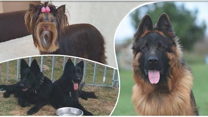 W Rudniku odbędzie się wystawa psów