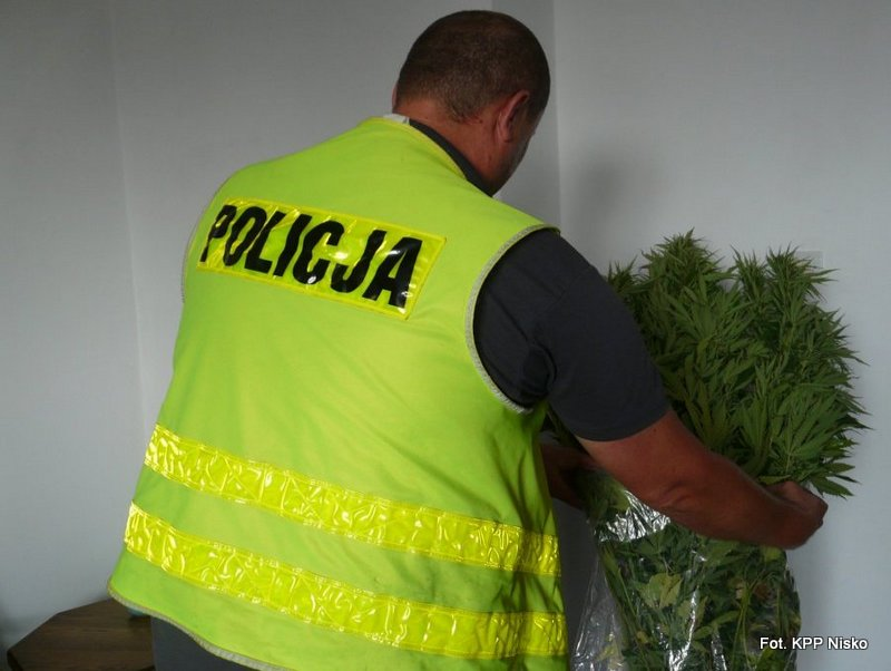 Policjanci zlikwidowali uprawę konopi