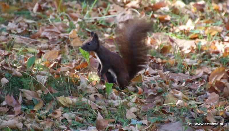 Miasto zadba o jeże i wiewiórki