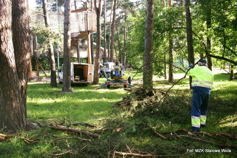 Stalowa Wola: W Parku Miejskim trwa przycinka suchych gałęzi