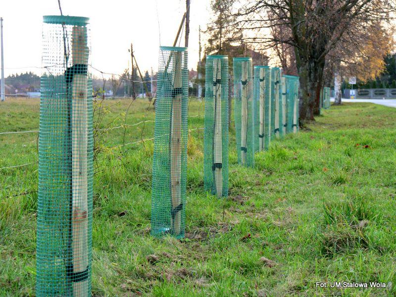 Stalowa Wola: Na terenie miasta posadzili drzewa i krzewy miododajne