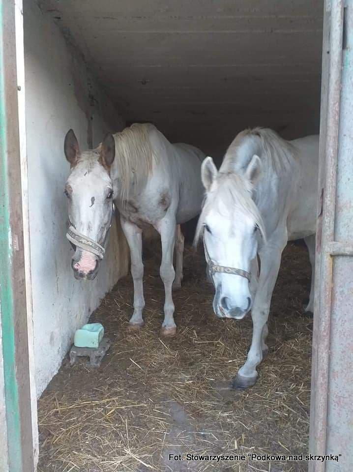 Pomóżmy stworzyć koniom lepszy dom